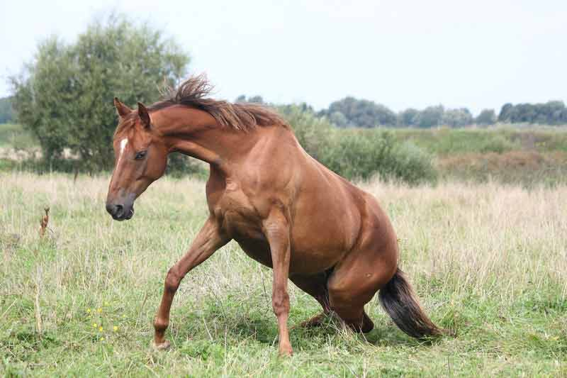 horse standing up