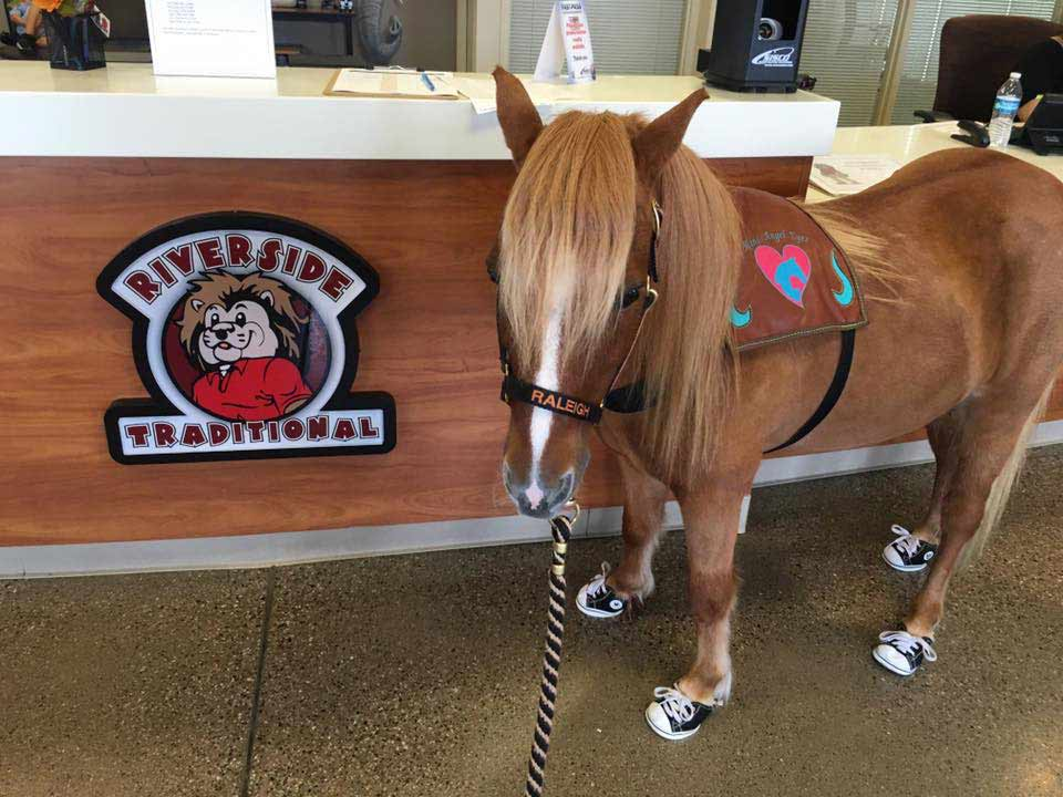 Miniature Horses: Raleigh